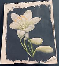 2021-4Agapanthus-sample.jpg