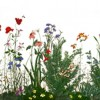 photo of a painting of poppies and wildflowers.