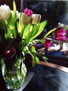 Photo of Tulips in a glass vase.